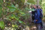 Ulva Island bird tour