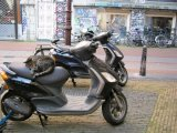 Cat on moped