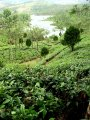 Kerala Tea Country