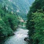 reka31